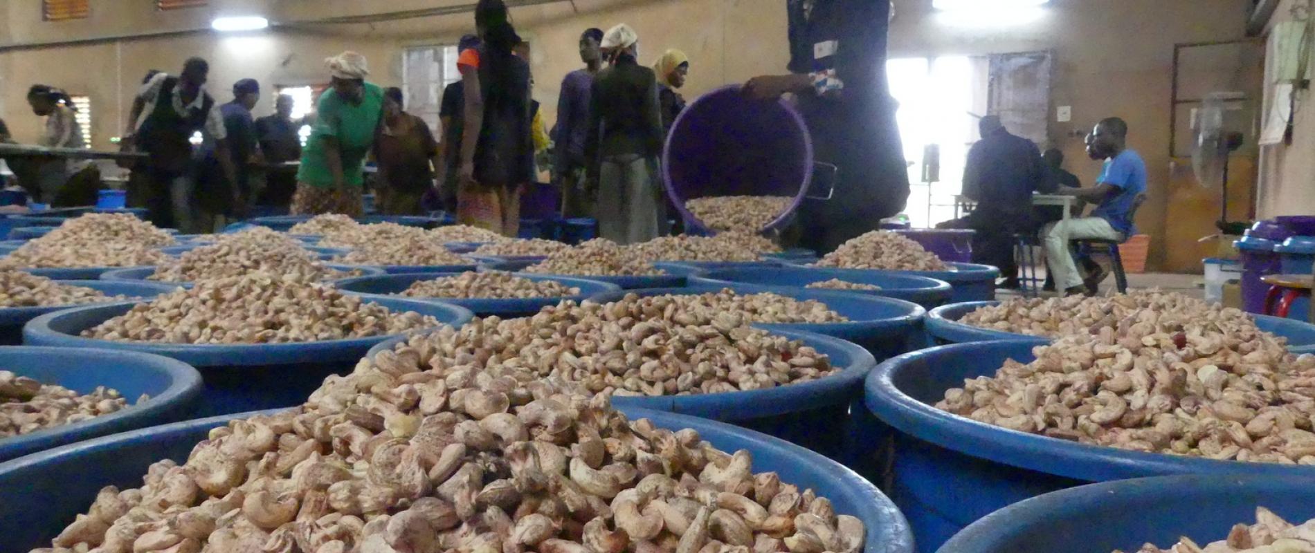 cashewfabriek