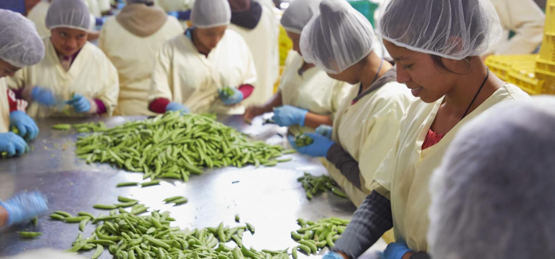 Guatemala Sacatepequez Adisgua Durabilis fair fruit groenten worden schoongemaakt en ingepakt voor europese en amerikaanse markt aan de lopende band in temperaturen rond het vriespunt 21-3-2018 foto Jaco Klamer