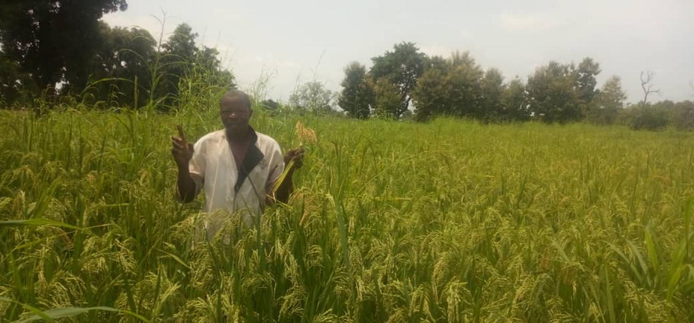 'Ik oogst meer dan vorig jaar'