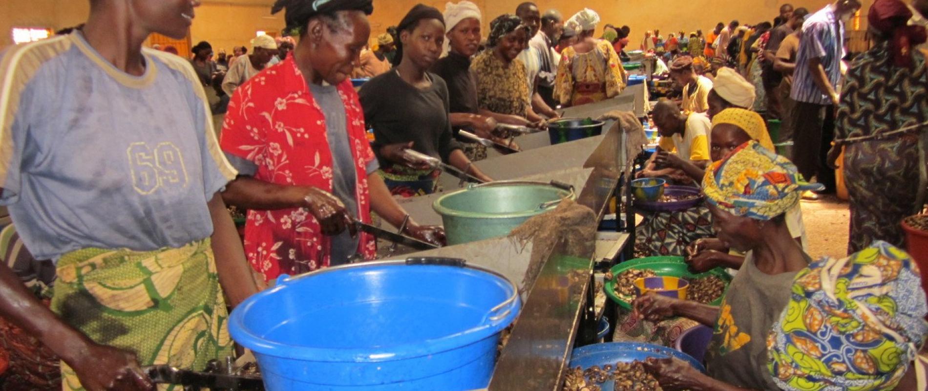 In de fabriek werken enkele tientallen mensen als notenkraker. Zijn kraken letterlijk de noten.