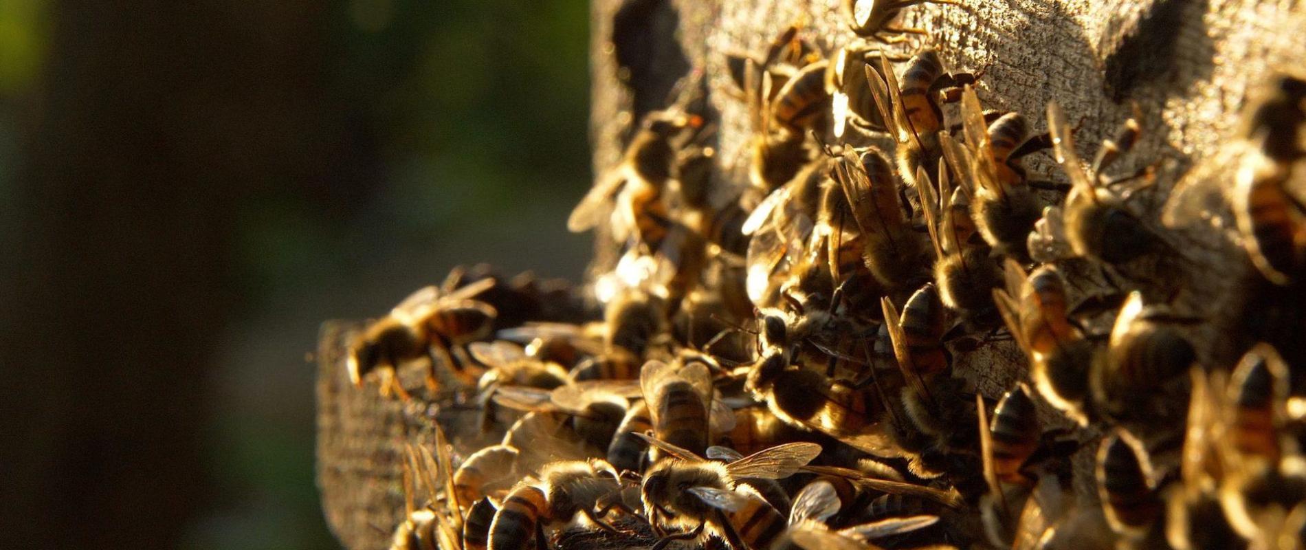 Mttd oeganda bijen algemeen 007