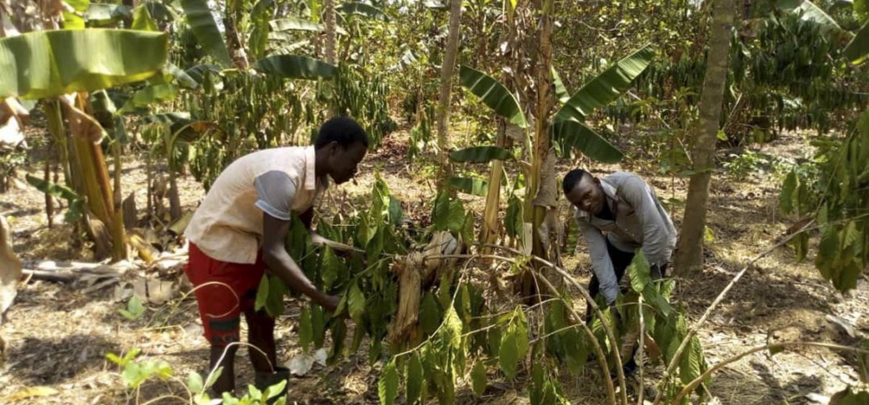 Ugandese julius ziet krokodillen in het dorp opduiken
