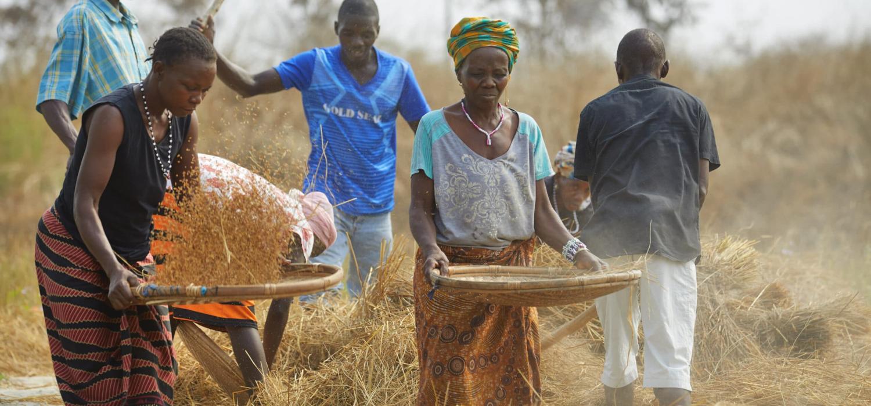 Sierra Leone Mecca Chiefdom Romende Sorie Koroma (35) Mamusa Bangura (25) vrouw, moeder Yeabu Koroma (55) verbouw droge rijst Foto Jaco Klamer 29-1-2020
